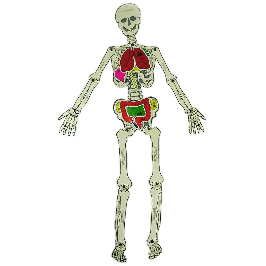 인체학습퍼즐(68cm)